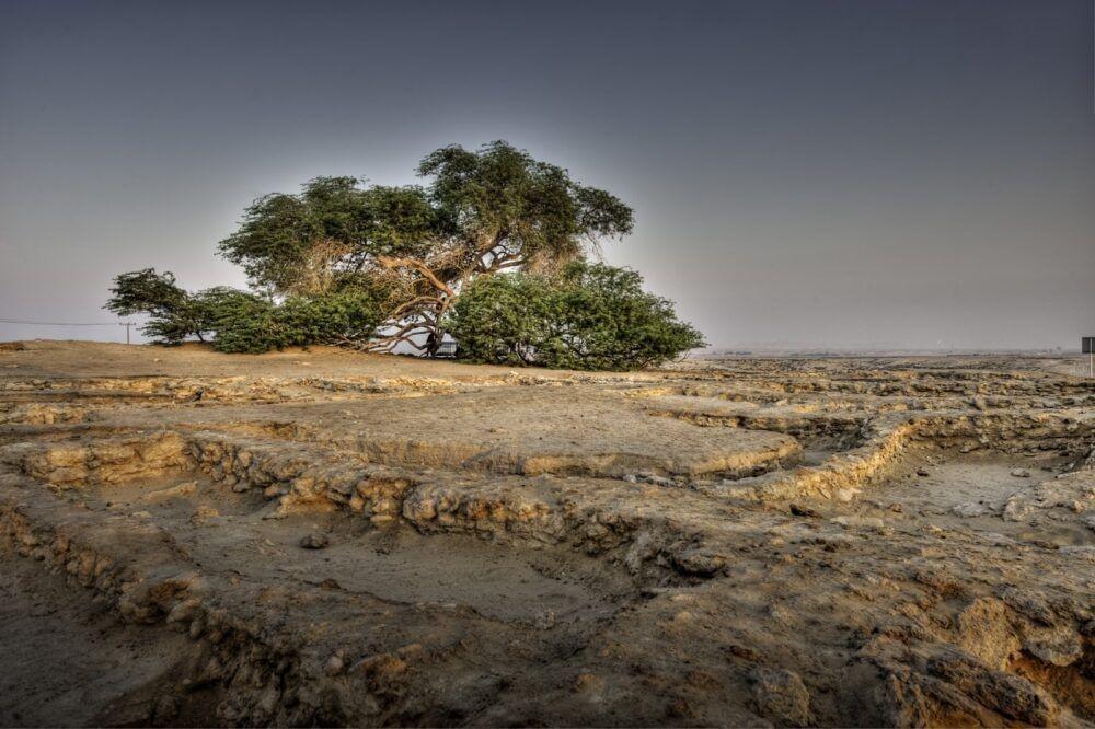 Los 10 árboles más famosos del mundo
