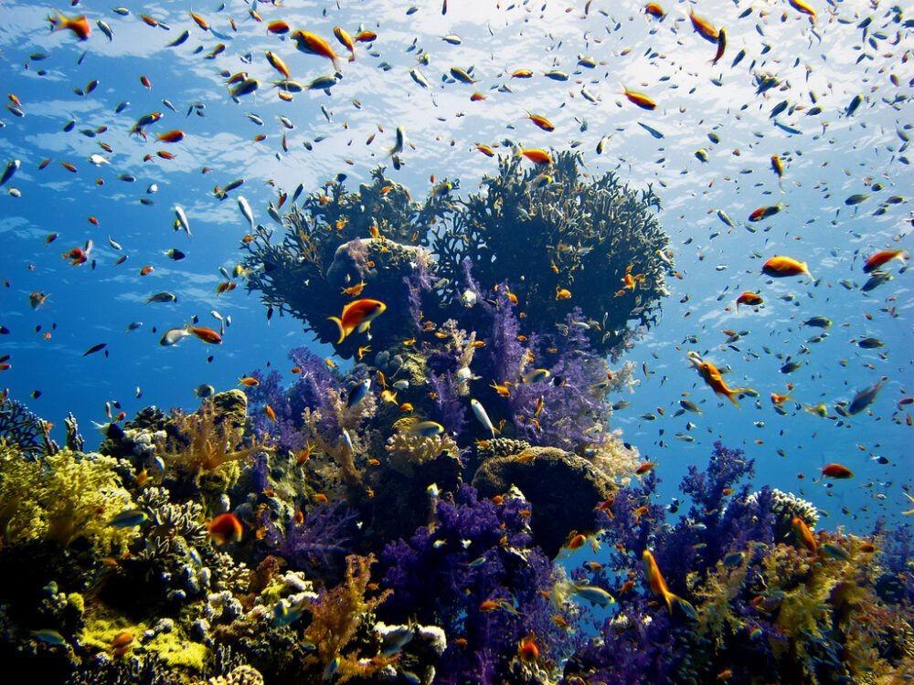 Arrecife del Mar Rojo