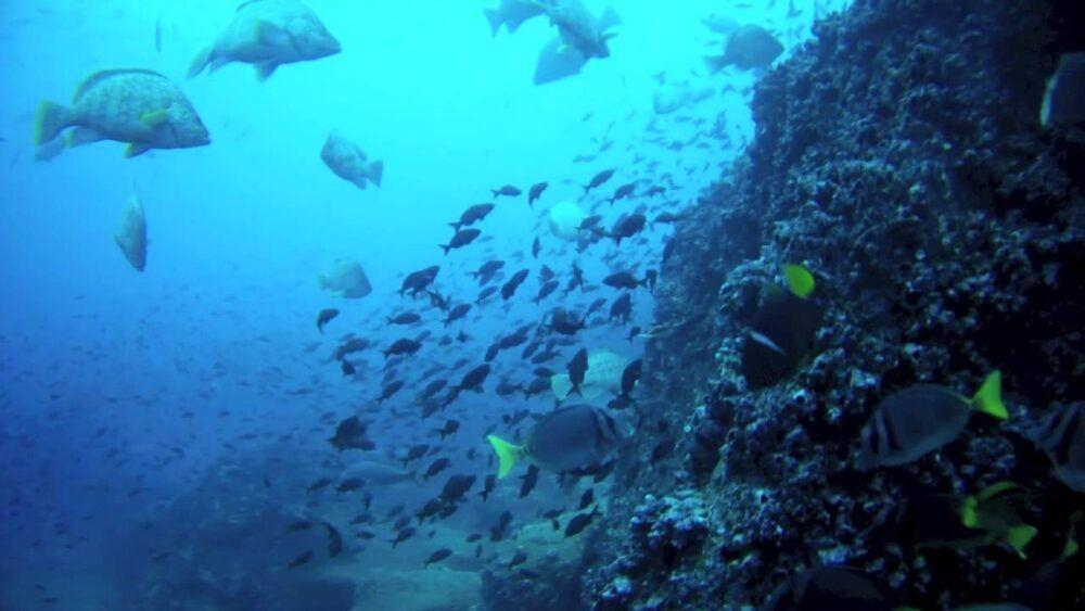 Islas Darwin y Wolf
