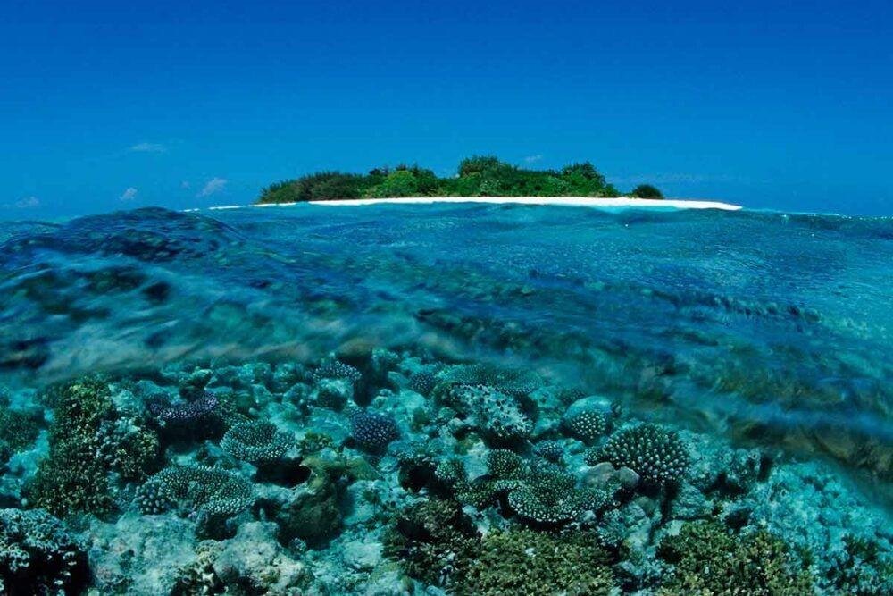 Maldives Reefs