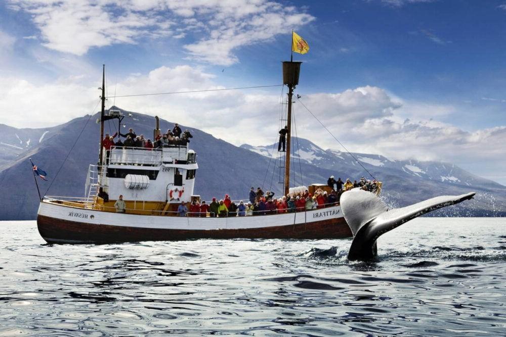 Avistamiento de ballenas en Húsavík