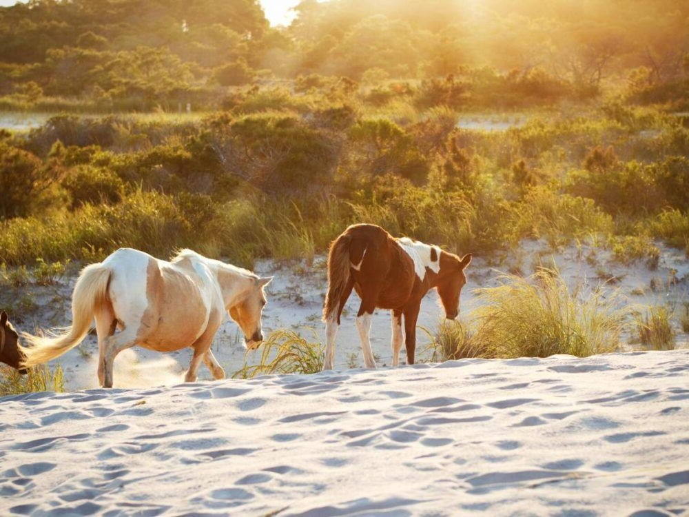 Isla Assateague