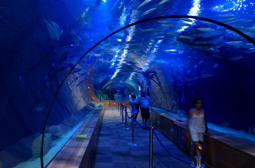L'Oceanografic Aquarium