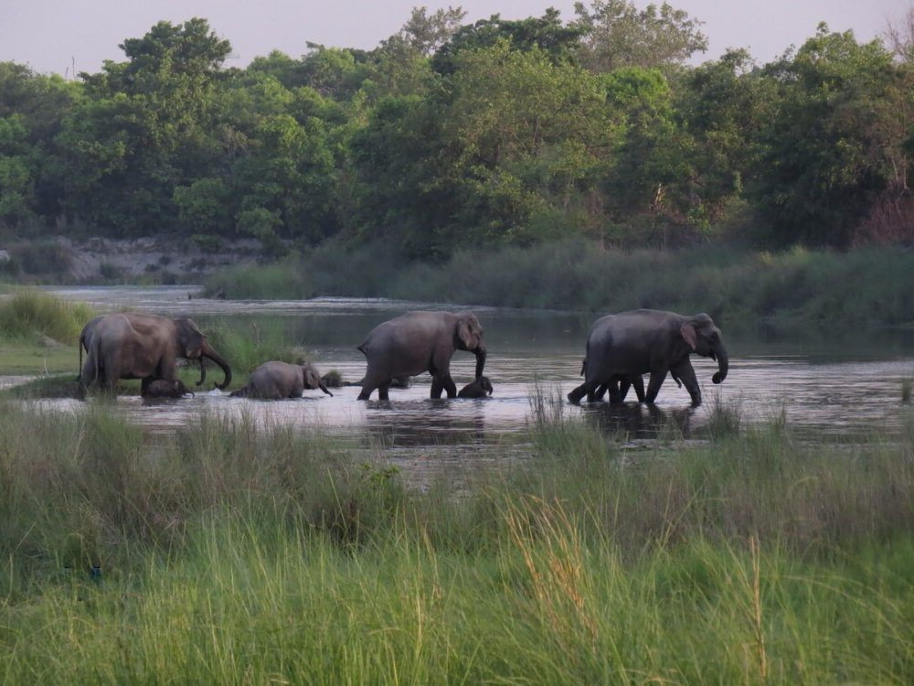 Parque Nacional Bardiya