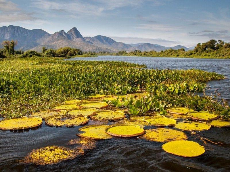 Parque Nacional Pantanal Matogrossensebrasil