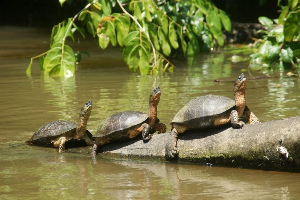 Parque Nacional Tortuguero