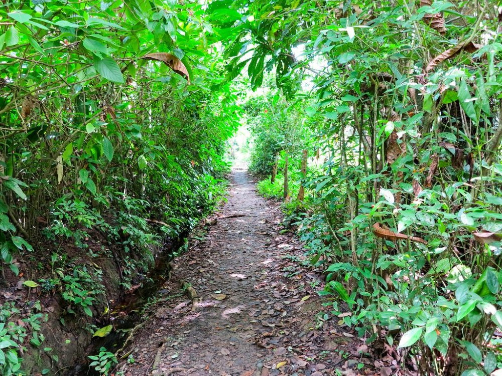 Reserva de Bosque Nublado de Monteverde