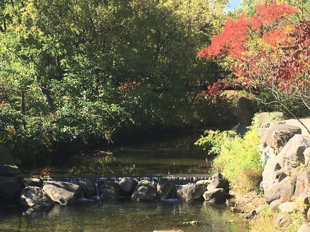 Anderson Jardines Japoneses
