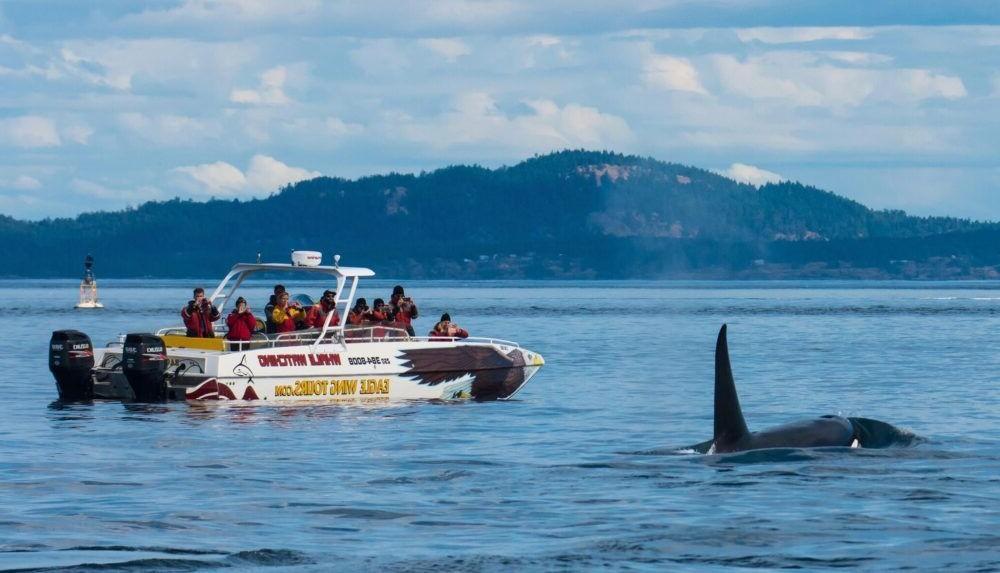 Avistamiento de ballenas de Vancouver