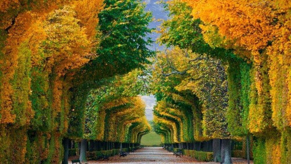 Bosques de Viena