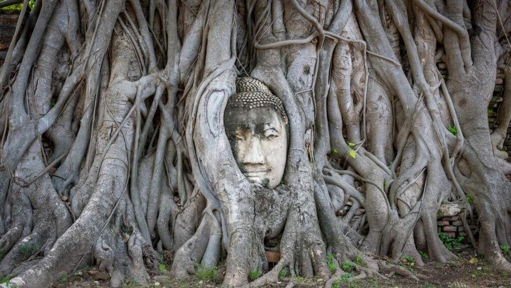 Cabeza de Buda Ayutthaya
