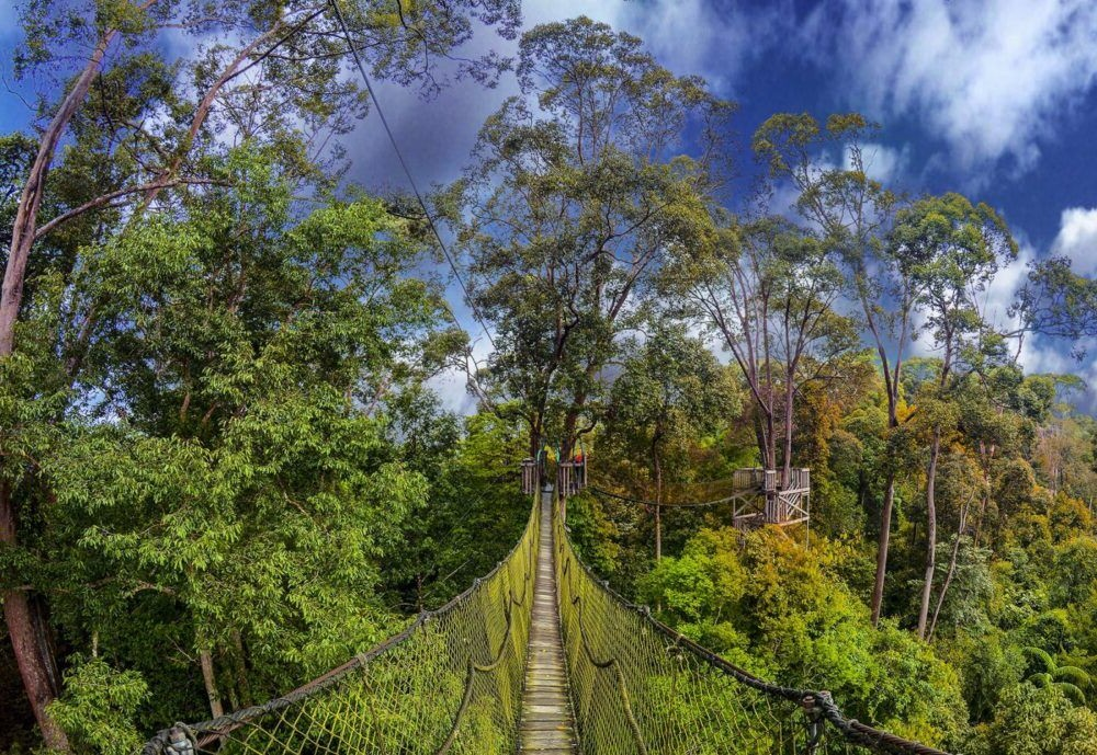10 Mejores Cosas para hacer en Taman Negara 2