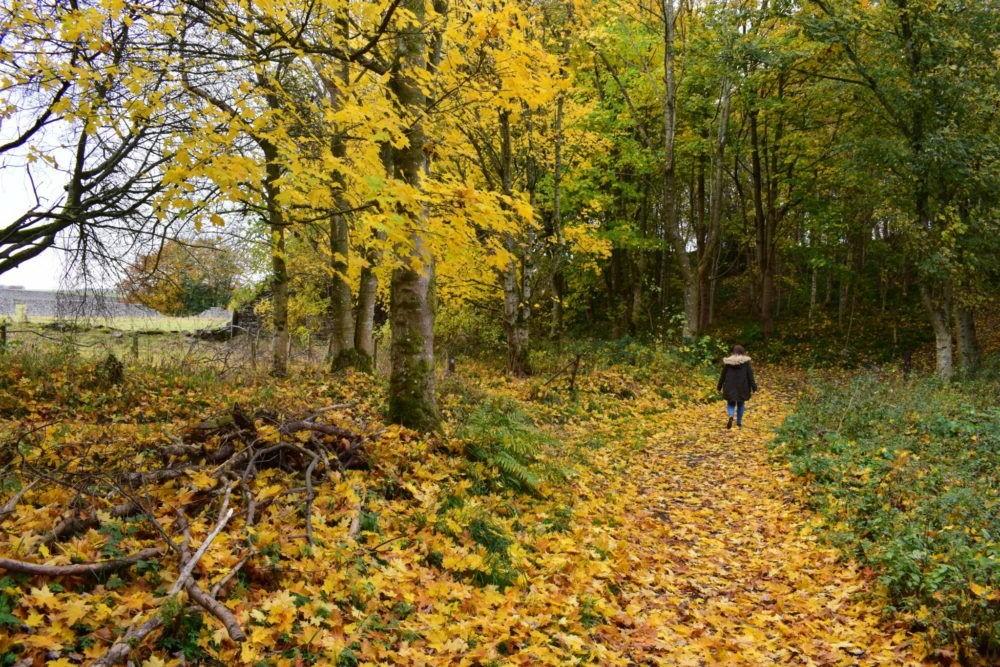 Clyde Valley Woodlands