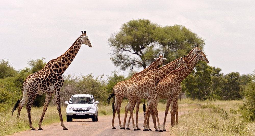 Los 10 Parques Nacionales más hermosos de Sudáfrica
