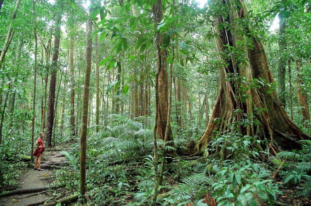 Parque Nacional de Daintree