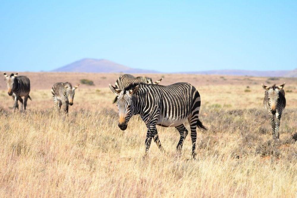 Parque Nacional de Mountain Zebra