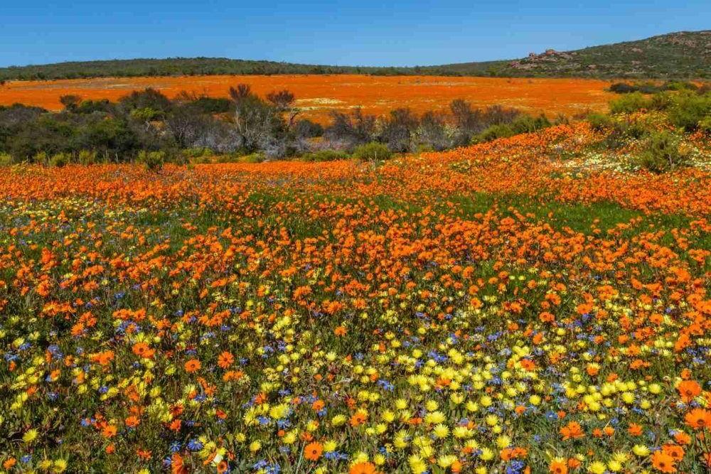 Parque Nacional de Namaqua