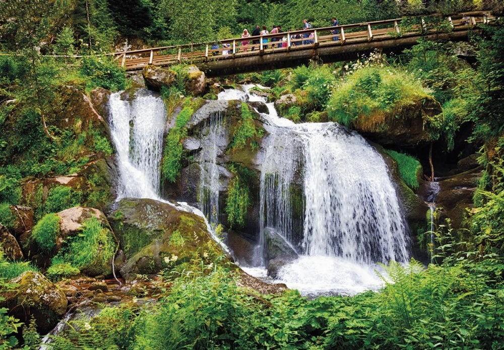 Parque Nacional de la Selva Negra