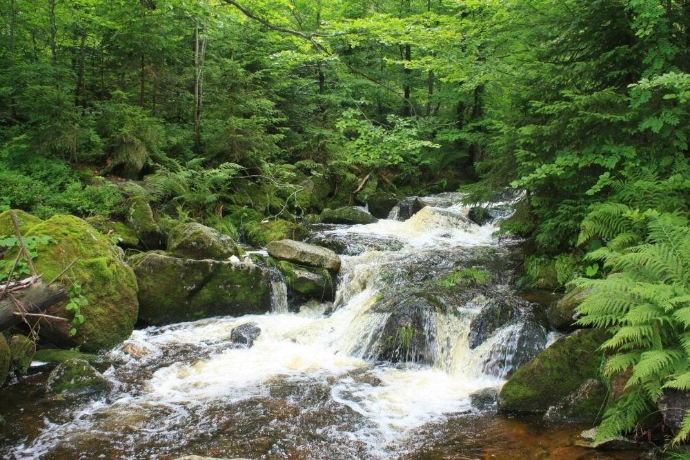 Parque Nacional del Bosque de Baviera