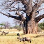 10 maravillas naturales del mundo
