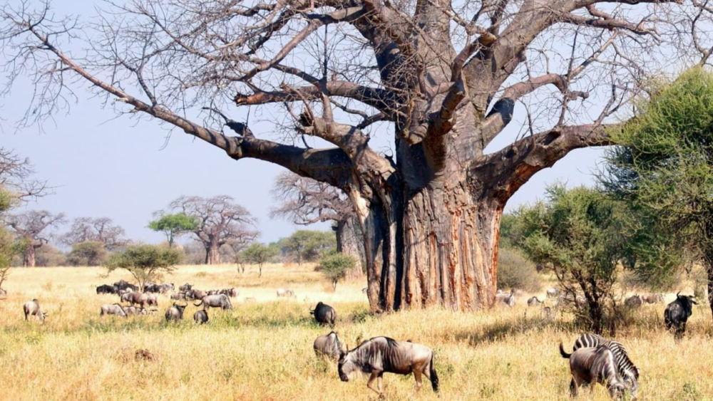 10 destinos para safaris de caza mayor
