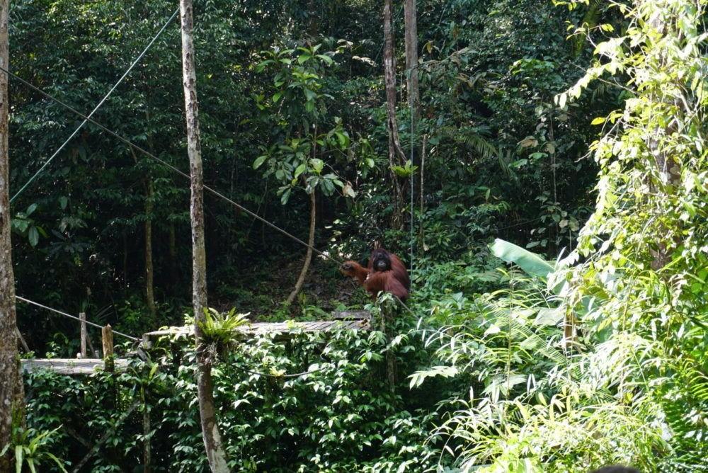 Reserva Natural Semenggoh