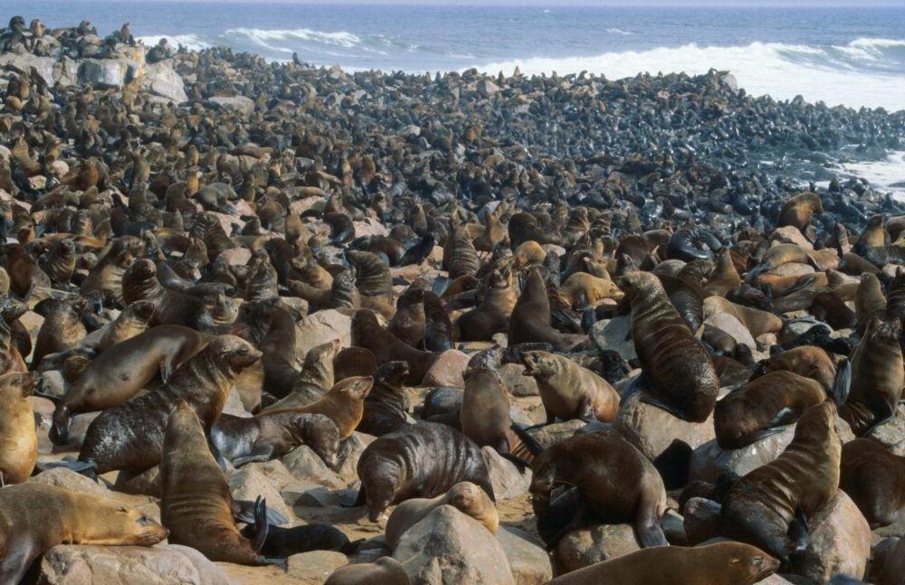 Atracción turística Cape Cross