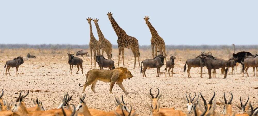 Atracción turística Etosha National Park