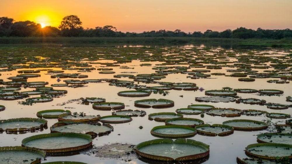 Conociendo el Pantanal Brasil
