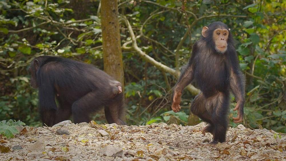 Conociendo el Parque Nacional Gombe Stream