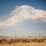 12 Parques Nacionales más hermosos de Tanzania