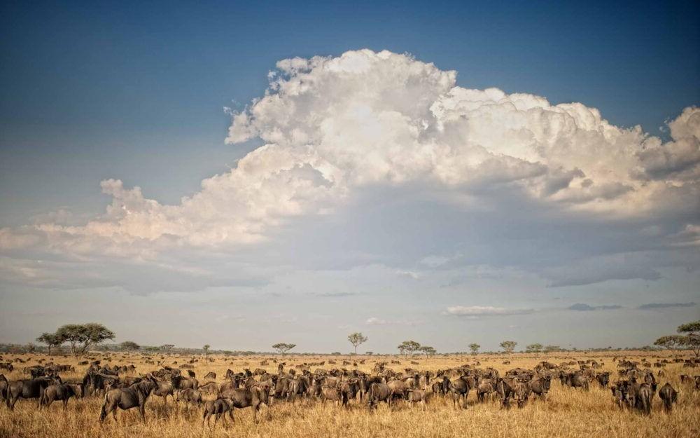 Conociendo mas sobre el Parque Nacional del Serengeti
