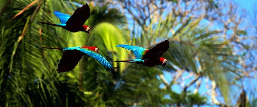 Cosas exoticas del Parque Nacional del Manu