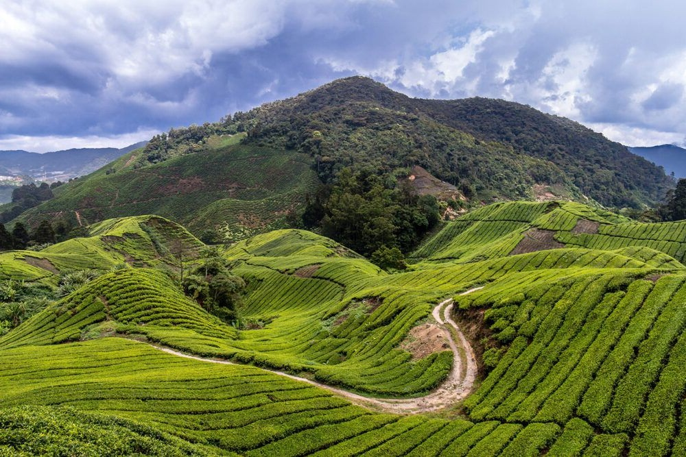 Destino Cameron Highlands Trail 10