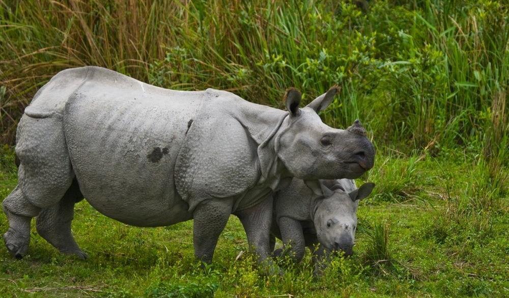 Destino Chitwan National Park