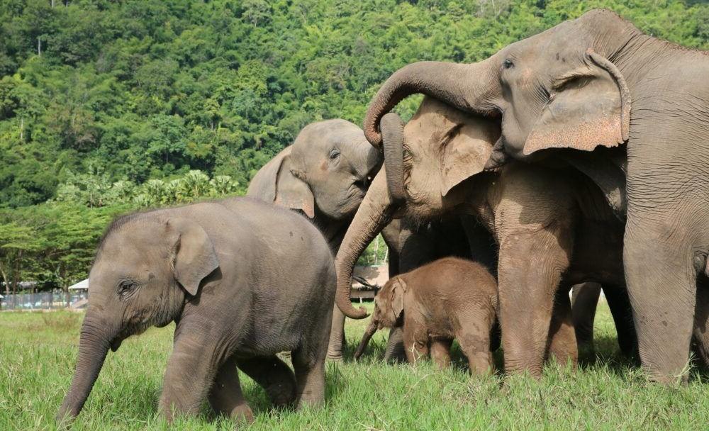 Destino Elephant Nature Park
