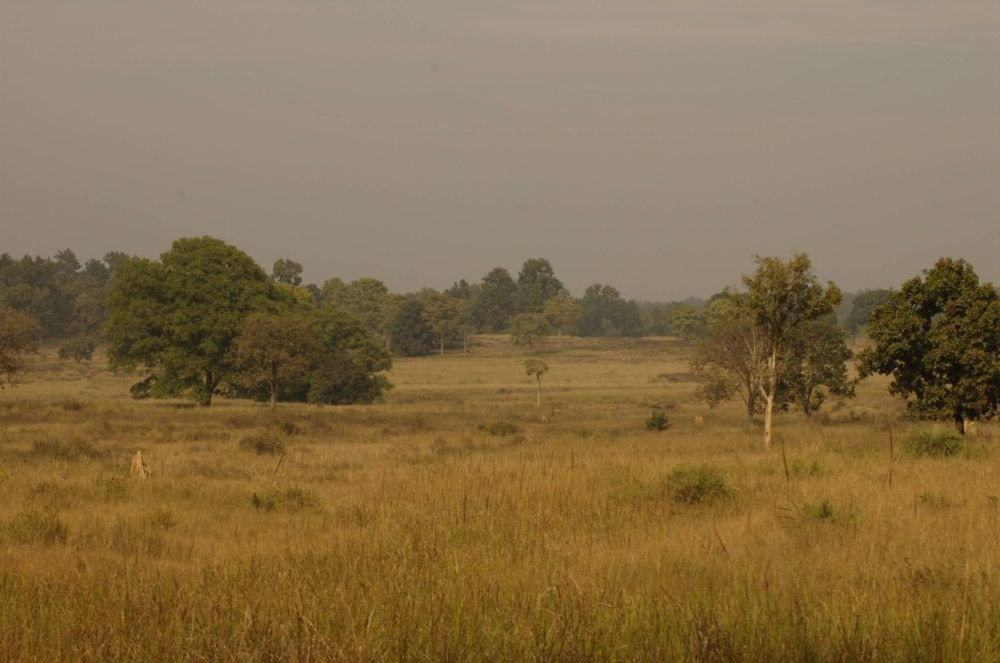 Destino India, Parque Nacional de Kanha