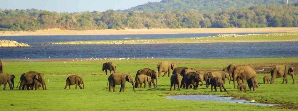 Destino Kaudulla National Park