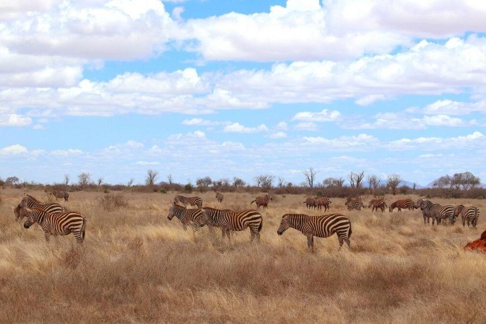 Destino Kenia, Parque Nacional Tsavo East
