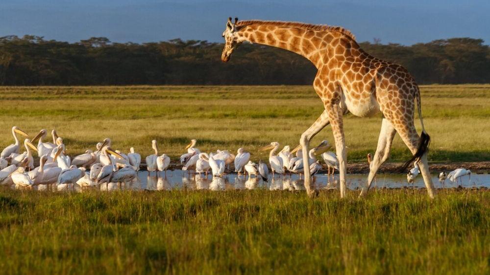 Los 10 Parques Nacionales más hermosos de Kenia
