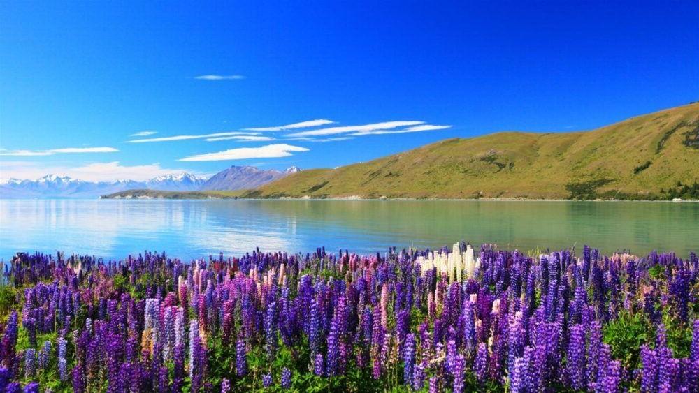 Los 12 lagos más hermosos de Nueva Zelanda
