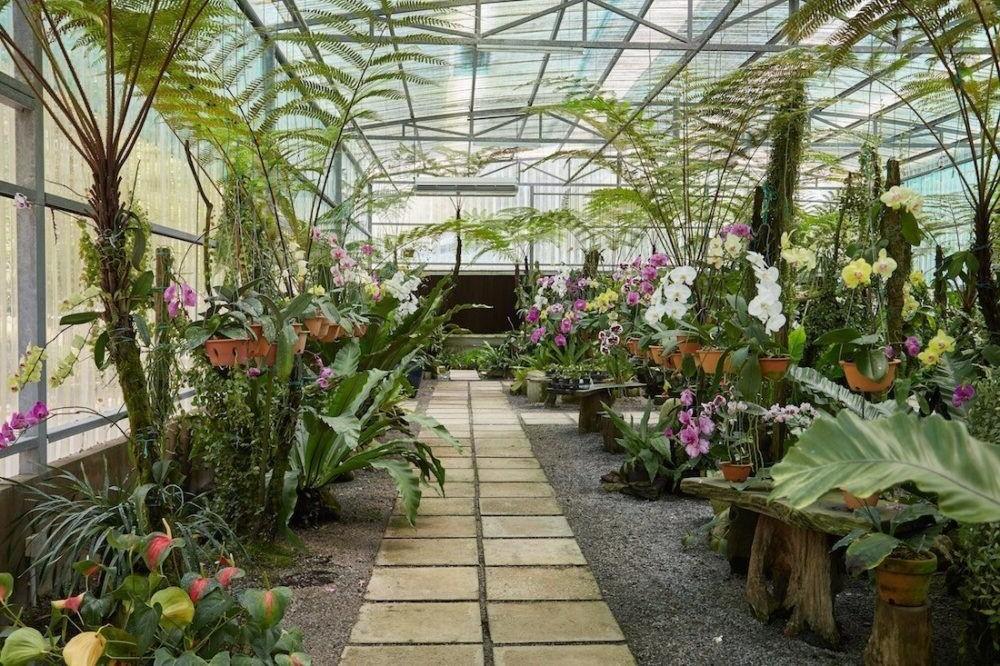Destino Malasia, Jardín de orquídeas de Sarawak
