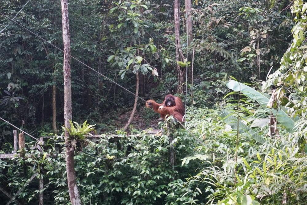 Destino Malasia Reserva Natural de Semenggoh