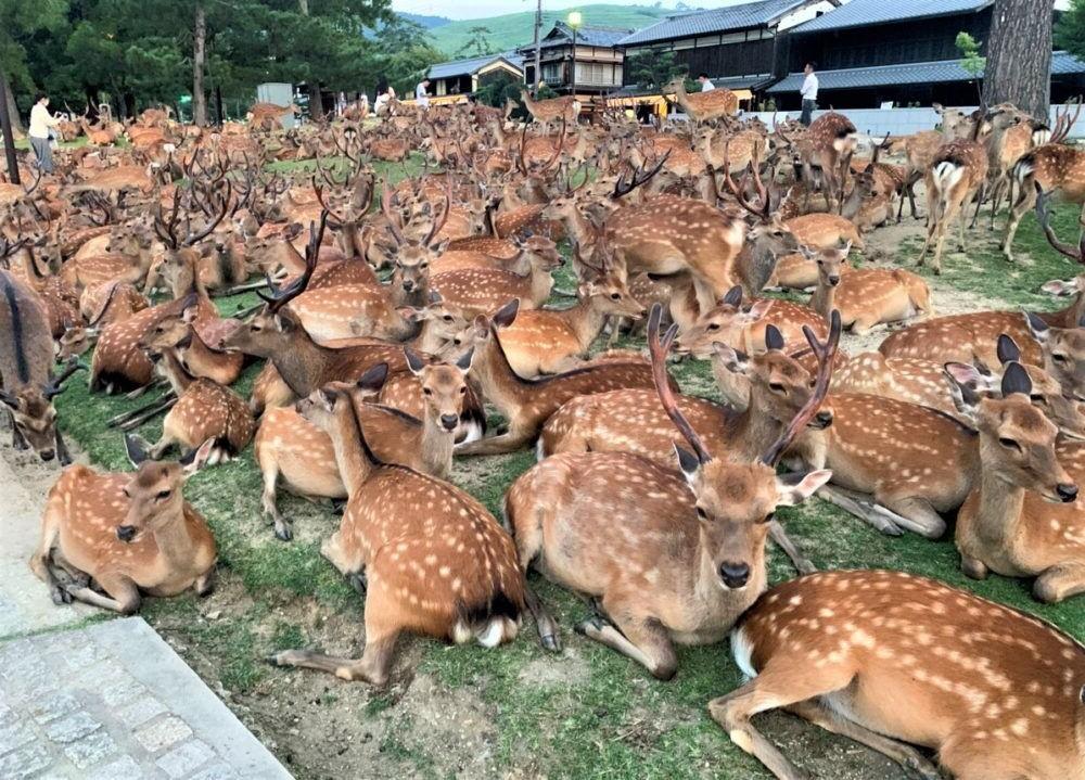 11 Mejores Cosas para hacer en Nara, Japón