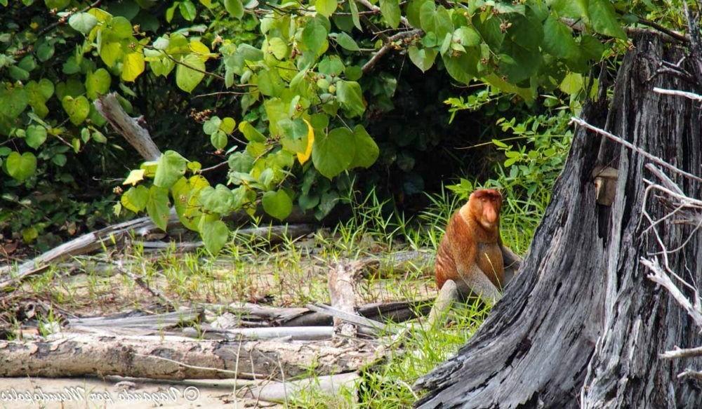 Destino Parque Nacional de Bako Malasia
