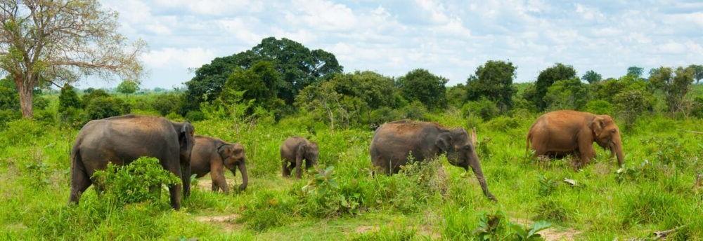 Destino Parque Nacional de Udawalawe