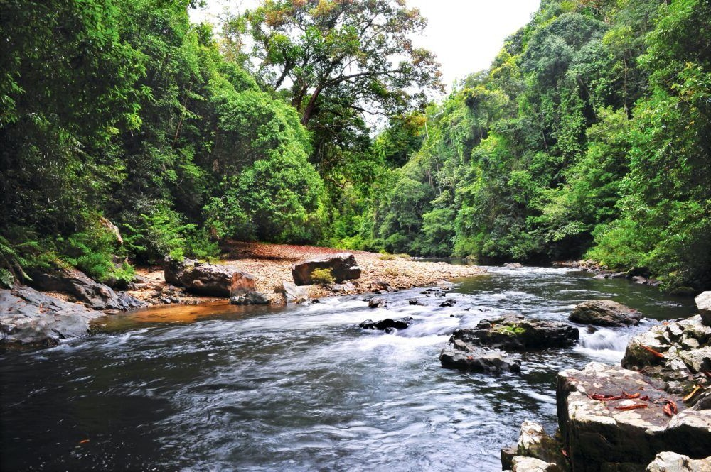 Destino Parque Natural de Kuala Lumpur