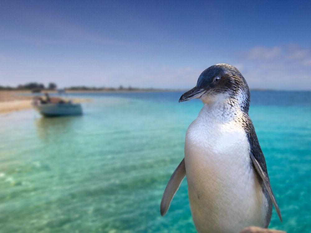 Destino Penguin Island