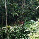 12 atracciones turísticas principales en Kuching, Malasia