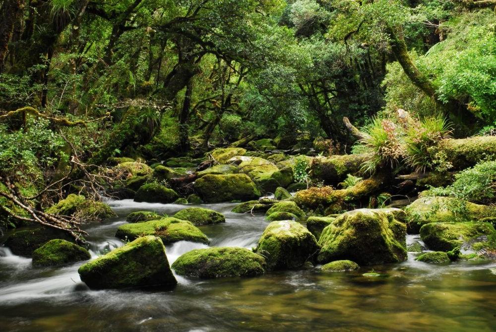 Destino Te Urewera National Park
